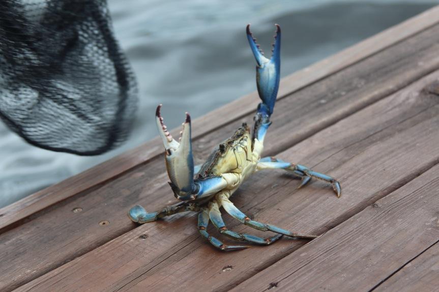 Crab Praise God 2